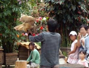 富士花鳥園 フクロウショー その1